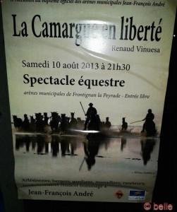 La Camargue en liberté
