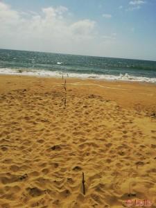 Beach of Barbate