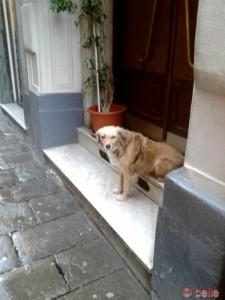 Nicol wartet auf Billy <3
