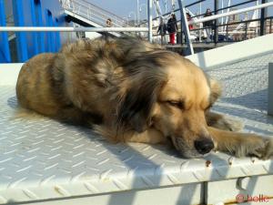 Nicol in der Sonne beim relaxen ♥