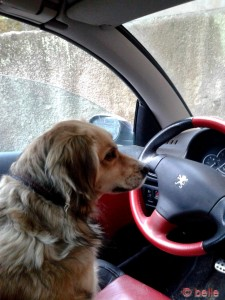 Nicol fährt :P