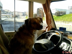 The Driver :P