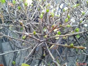 ...die ersten Frühlings-Boten!