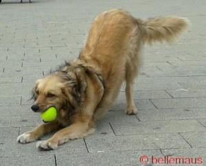 Nöööö!!! Den Ball geb' ich nicht her!!!
