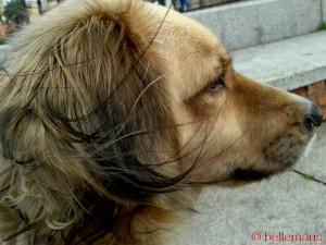 ...Frisur sitzt nicht so richtig... Blöder Wind von hinten!