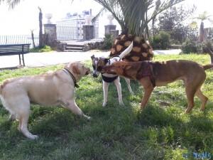 Hunderudel - unbekannter Hund, Bea und Sam