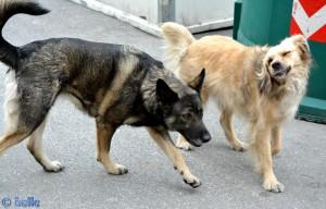 Athena und Nicol