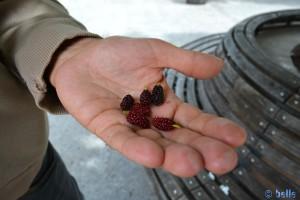 Früchte an den Bäumen - ähnlich wie Brombeeren