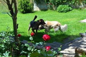 Lucky – Nicol's Freund!
