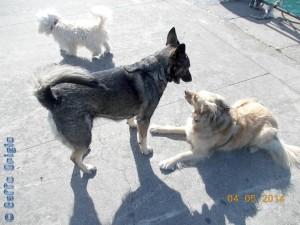 Athena & Nicol