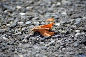 Verwelktes Blatt am Boden