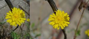 Flower HandyCam Nikon-Original