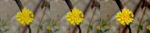 Panorama Flower Nikon