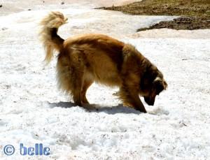 Nicol im Schnee ;)