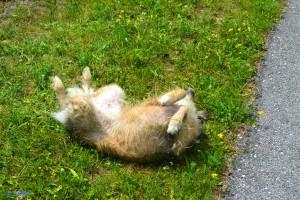 Nicol – the Happy Dog!