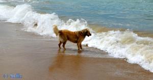 Nicol wagt sich mutig in die Fluten! ...überlegt aber noch :P