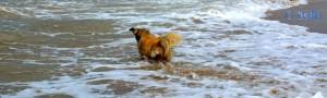 Nicol wieder in den Fluten :)
