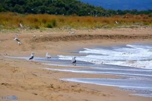 Möwen am Strand von Termoli