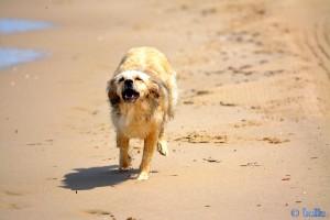 """...sorry Nicol – das Bild schaut etwas """"dümmlich"""" aus – aber es muss sein :P Nicol – the flying Dog – Beach of Termoli"""
