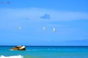 Drei Möwen im Flug – Beach of Termoli