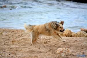 Nicol – the fliying Dog ♥