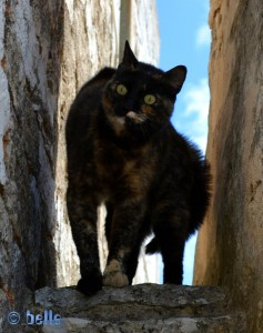 Angriffslustige Katze in Alberobello