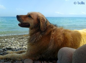 Nicol lazy on the Beach of Trebisacce – Calabria – Ionisches Meer