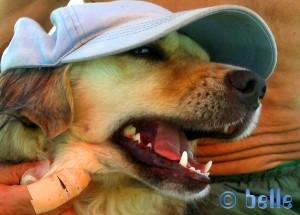 Nicol – the VIP-Dog! Mit Baffo und seinem verletzten Finger :( ...aber mein Lieblings-Bild von heute!
