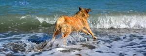 Nicol – the flying Dog! Beach of Trebisacce. Wo is'es hin das Stöckchen???