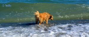 ...wo – zum Teufel!!! - ist das Stöckchen??? ...die Welle? Die seh' ich auch nicht :o