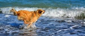 ...auf zum nächsten Stöckchen! Nicol the flying Dog – Beach of Trebisacce