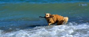 Jaaaaaaaaaaaa – gefunden! Nix wie weg – die nächste Welle kommt!
