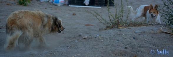 Nicol mit dem wilden Hund am Strand von Roccella
