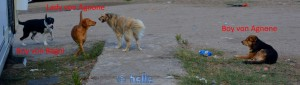 Wilde Hunde begrüssen Nicol ♥