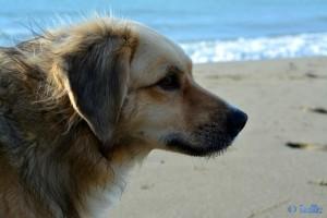 Nicol at the Dream-Beach at Marina di Torre del Lago Puccini