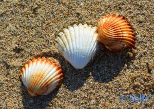 Muscheln am Strand von Castelldefels und viele Erinnerungen an letztes Jahr...