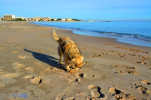 Nicol at the Beach of L'Hospitalet de L'Infant