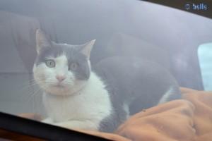 Katze im Camper auf Reisen – gesehen in Port Vendres - France
