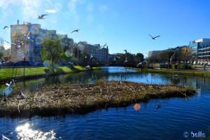 Kleiner See in Peniscola mit unzähligen Vögel und auch reichlich Fischen im Wasser!