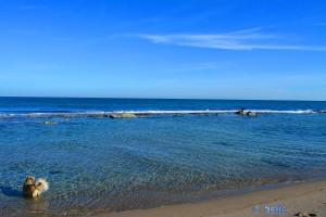 Nicol gönnt sich ein Bad am Strand von Alicante – oder will sie nur die Vögel jagen?