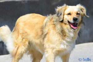Nicol – the smiling Dog ♥