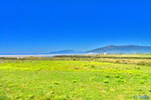 Kühe am Playa de los Lances Sur – Tarifa – gesehen von dem Pfad in den Dünen.