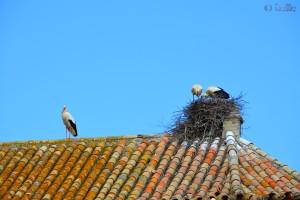 Nahaufnahme von einem Storchen-Paar