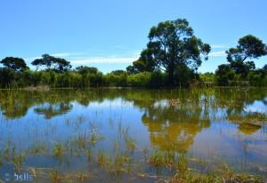 Teich und Frosch-Paradies in Barão São João