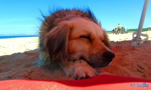Nicol at Praia da Lagoa de Albufeira
