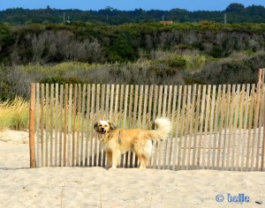 Nicol at Praia de Poço da Cruz – Portugal