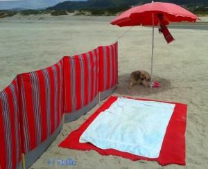 Unsere kleine Oase am Strand