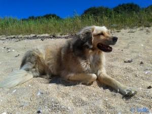 Nicol at Playa Las Pipas – Reboredo – Spain