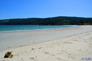 Nicol at Playa-de-Os-Muiños