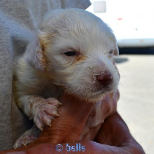 Baby-Dog – 15 Days old